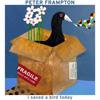 ピーター・フランプトンが最新楽曲「I Saved a Bird Today」のアコースティック・パフォーマンス映像を公開