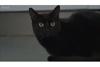 かわいい黒猫に秘められた受難の歴史を追う NHK『ヨーロッパ 黒猫紀行』が4月29日放送