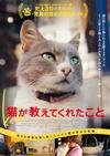 """""""猫の街""""トルコのイスタンブールで暮らす野良猫たちのドキュメンタリー映画『Kedi』が日本公開決定"""