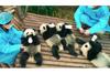 パンダの楽園「成都パンダ基地」が舞台のドキュメンタリー映画『PANDAS』 トレーラー映像公開