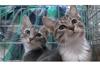 新たに子猫を迎えるお宅をのぞき見 猫と飼い主の成長物語 NHK BSプレミアム『ねこ育て』2月22日再放送