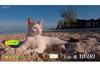 『岩合光昭の世界ネコ歩き』 新作の舞台はジャマイカ 3月1日放送