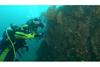 さかなクンがまだ見ぬ海を潜りまくって探検するNHK『潜れ!さかなクン』 新作は「熱海 ロマンの海へ」