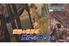 童話の裏に隠された歴史の闇事件に迫る NHK『ダークサイドミステリー』5月23日放送
