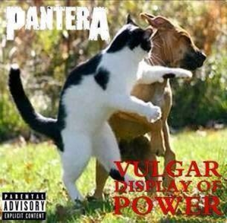 cat & dog : Pantera / Vulgar Display of Power