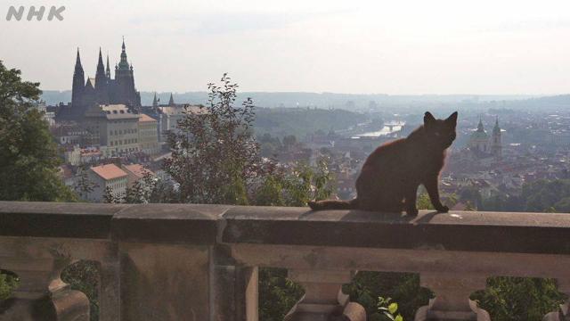 NHK BSプレミアム『岩合光昭の世界ネコ歩き「プラハ」』