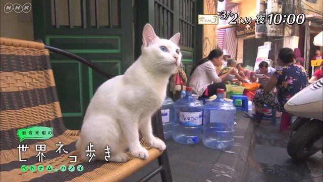 NHK BSプレミアム『岩合光昭の世界ネコ歩き「ベトナム・ハノイ」』