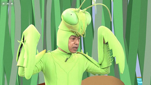 NHK『香川照之の昆虫すごいぜ!「トノサマバッタ」』 (c)NHK