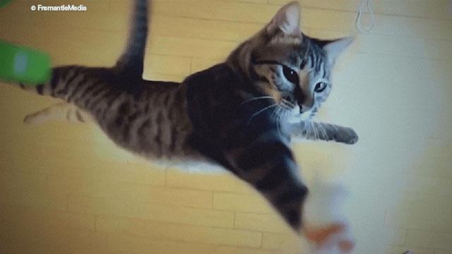 【テレビ】イヌとネコはどちらが優れているのか?科学の力で答えを出す Eテレ『イヌ vs. ネコ ペット徹底対決』放送 [無断転載禁止]©2ch.netYouTube動画>8本 ->画像>59枚