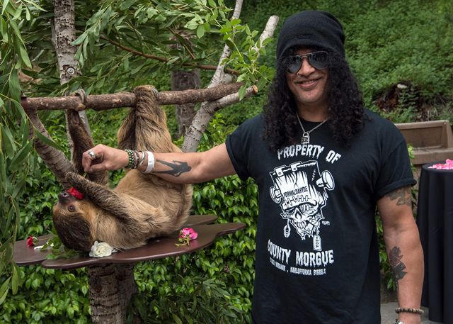 Slash and an L.A. Zoo sloth at the 2016 Greater Los Angeles Zoo Association Beastly Ball. Photo Credit: Jamie Pham.