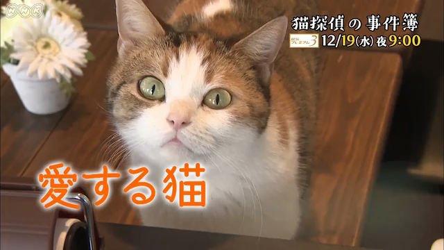 "NHKドキュメンタリードラマ ""猫探偵の事件簿""』(c)NHK"