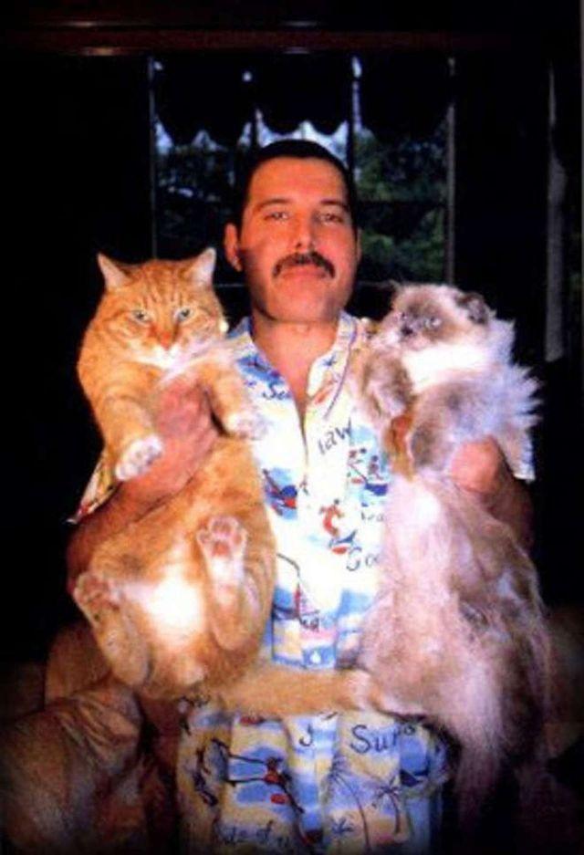 Freddie Mercury and his cats (Oscar and Tiffany)