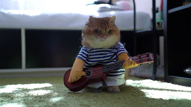 Hosico's guitar concert