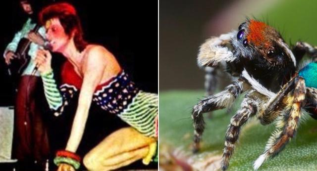 Amanda: David Bowie as spiders.